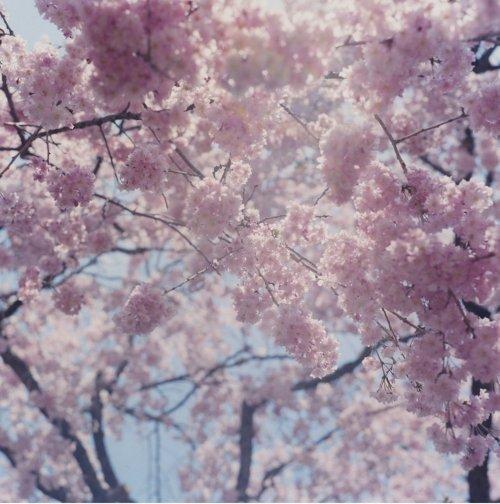 rinko_kawauchi_03